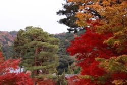 京都の紅葉3