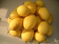 無農薬のレモン
